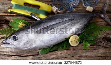 Albacore caught in sport fishing - stock photo