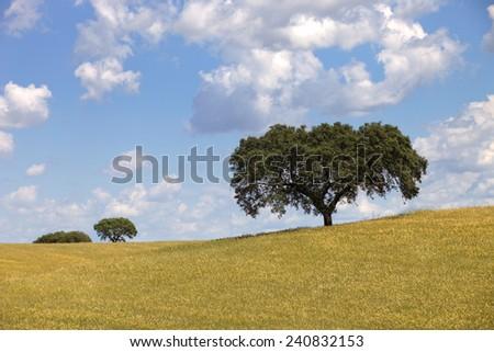 alentejo farm view, in the south of portugal - stock photo
