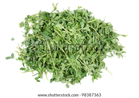 Alfalfa - stock photo