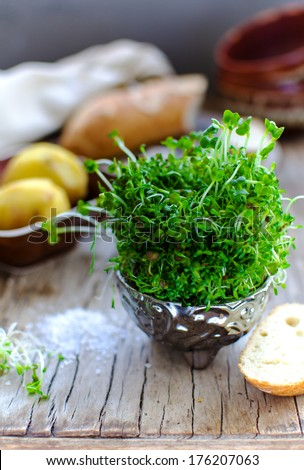 Alfalfa and Radish sprouts, boiled potatoes, cheese bread and salt - stock photo