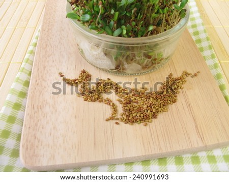 Alfalfa seeds and sprouts - stock photo