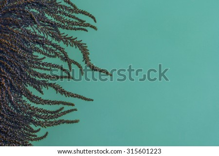 Algae and seaweed on the pier in the lagoon of Grand Canal in Venice, Italy. - stock photo