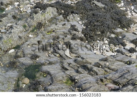 algae overgrown rock formation in Brittany (France) - stock photo