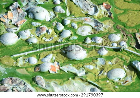 Algae polluted water  - stock photo