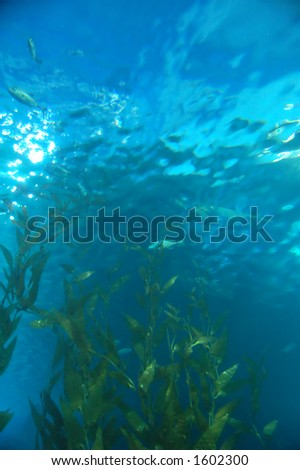 Algae underwater - stock photo