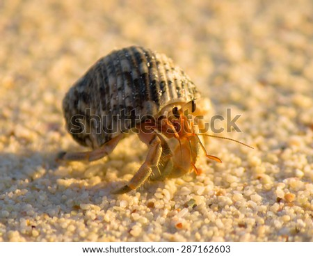 Alive Shell Mobile Homeowner  - stock photo