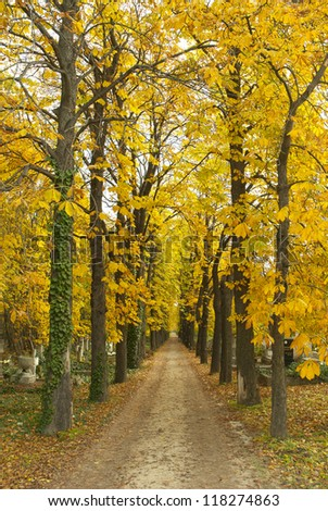 alley at autumn in a cemetery - stock photo