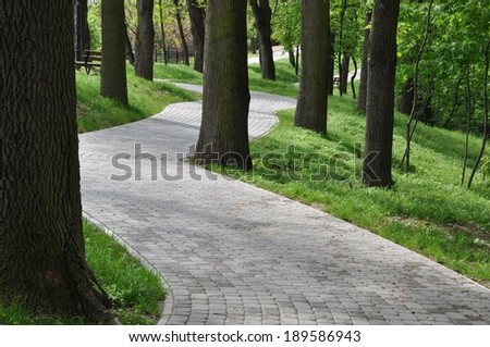Alley between the trees in the park - stock photo