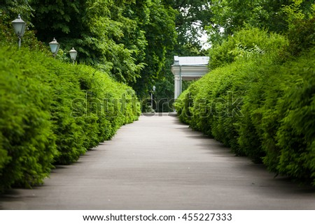 Alley footpath in the pine forest, reserve, beautifull spruce alley. Europe. Pine Park alley. Sustainable industry, ecosystem and healthy environment concepts and background. - stock photo