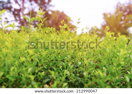 Alley green plants closeup background - stock photo