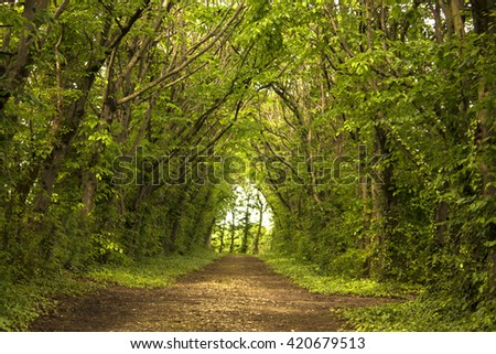 alley in the old park - stock photo
