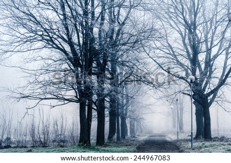 Alley in the park in the winter  - stock photo