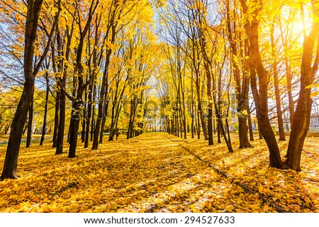 Alley in the sunny autumn park - stock photo