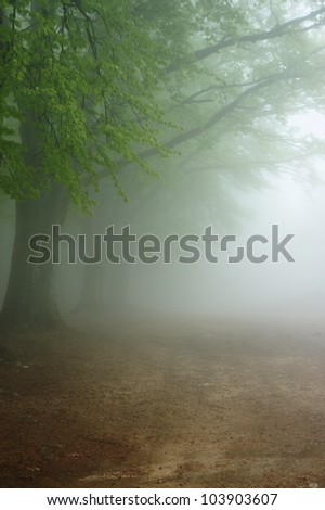 Alley in the very dense fog - stock photo