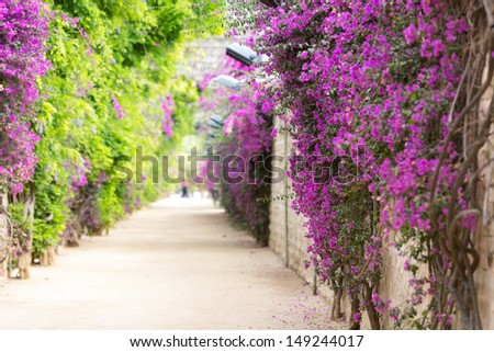 Alley with blooming flowers in spring park - stock photo