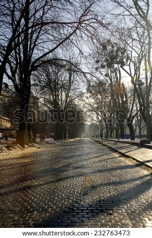 alley with trees and long shadows on stone road at winter morning - stock photo