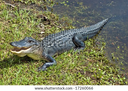 Alligator Warning - stock photo