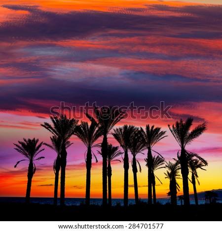 Almeria Cabo de Gata sunset pam trees in Retamar beach at Spain - stock photo