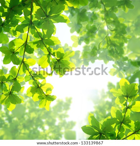 Almond leaf background - stock photo