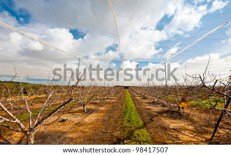 Almond Seedlings Sheltered from the Sun, Israel - stock photo
