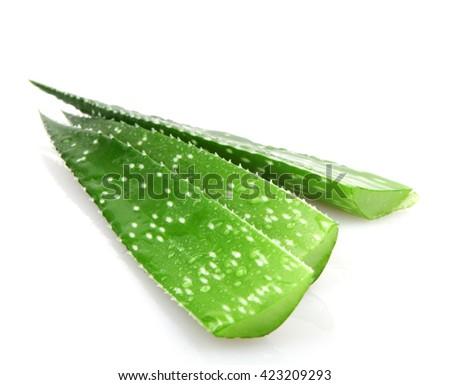 Aloe plant isolated on white. - stock photo