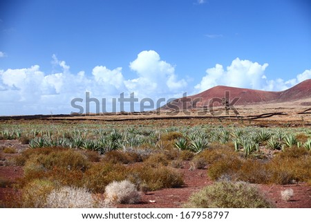 Aloe tree in the foreground,with Red Rock Canyon in the distance. Fuertoventuro, Canarian Island - stock photo