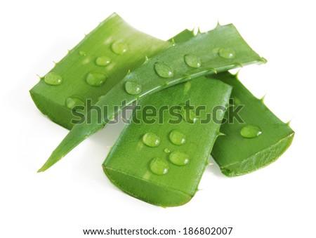 aloe vera leaves isolated on white background - stock photo