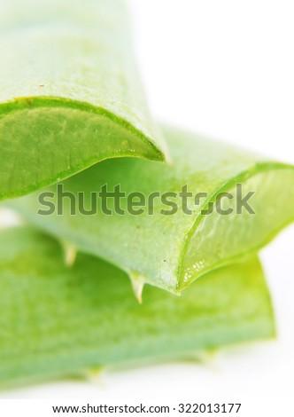 Aloe vera macro - stock photo
