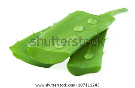 Aloe Vera plant leaves with water drops isolated on white background - stock photo