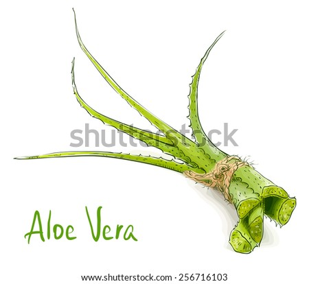 Aloe vera. Raster version. - stock photo