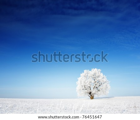 Alone frozen tree on winter field and blue sky with rare clouds - stock photo
