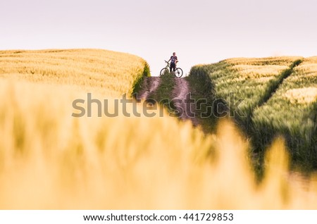Alone girl on bicycle between two wheat fields - stock photo