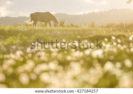 Alone horse on farm meadow in beautiful last sunset light. Beautiful wallpaper - stock photo
