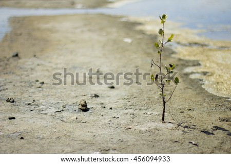 Alone mangrove tree grows in the ocean beach in the shallow water - stock photo