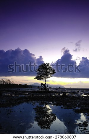 Alone mangrove tree grows in the shallow water during sunrise  - stock photo