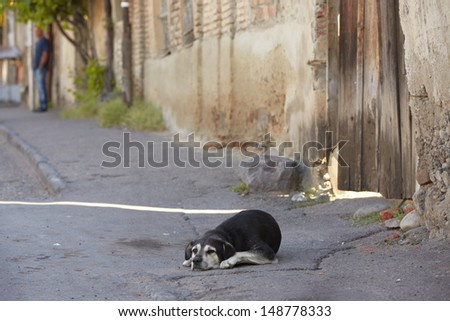 Alone old dog is lying on street - selective focus - stock photo