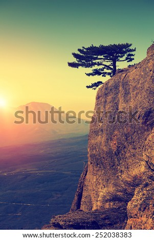 Alone pine tree on the edge of rock at sunrise time. Mountain landscape - stock photo