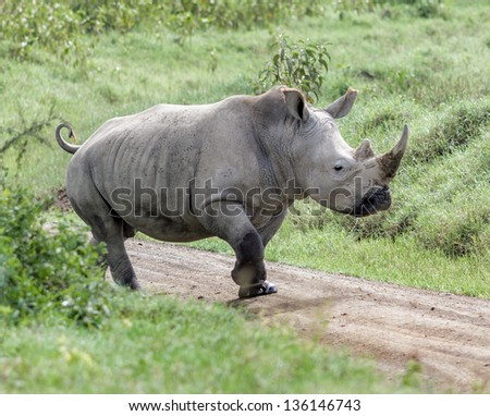 Alone rhinoceros at the Lake Nakuru National Park - Kenya, Eastern Africa - stock photo