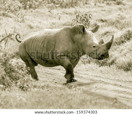 Alone rhinoceros at the Lake Nakuru National Park - Kenya, Eastern Africa (stylized retro) - stock photo