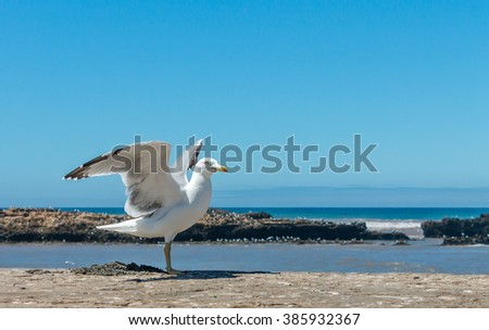Alone seagull stands wings spread on a wall - stock photo