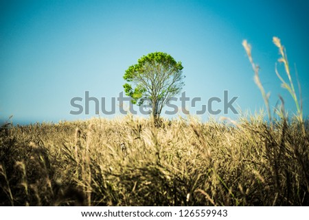 Alone Tree. - stock photo
