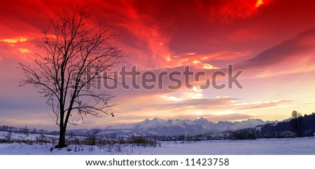 alone tree against mountains - stock photo