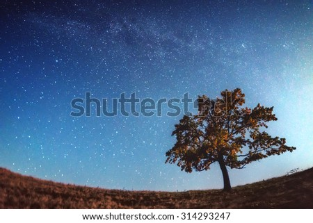alone tree and milky way - stock photo