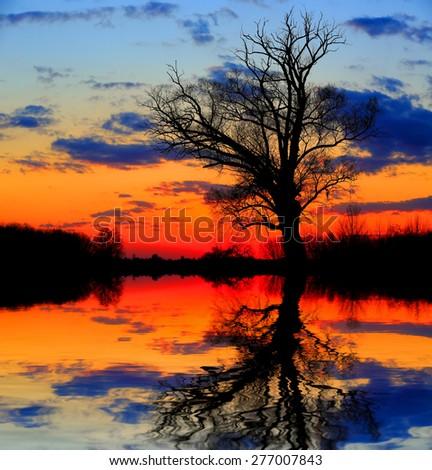 Alone tree in dusk near lake shore - stock photo