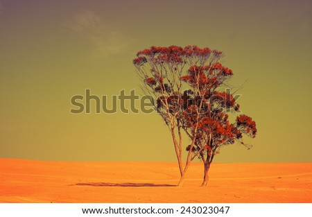 Alone tree in Judean Desert at sunset - stock photo