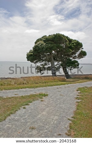 Alone tree near the ocean (Churchill island, Victoria, Australia) - stock photo