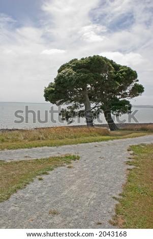 Alone tree near the ocean (Churchill island, Victoria, Australia) - stock photo