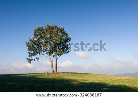 Alone tree on horizon against blue sky with clouds - stock photo