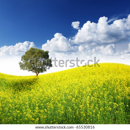 Alone tree on the beautiful field of yellow flowers - stock photo