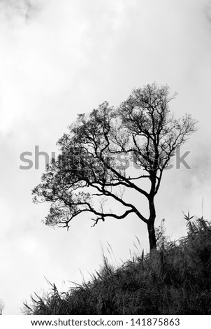 Alone tree on the hill - stock photo